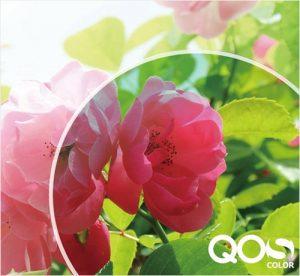 QOC クオリティ・オブ・シー カラー